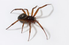 UK school forced to close after becoming infested with venomous spiders