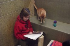 Children read aloud to cats in the most adorable book club ever
