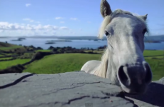 Gorgeous Irish montage will remind you why there's no place like home