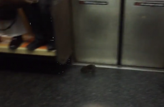 Rat invades New York subway train, causes mass commuter freakout