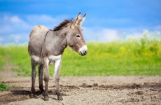 Workers at donkey sanctuary ballot for industrial action