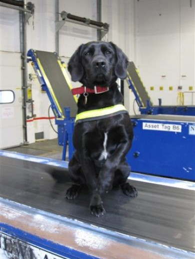This is Stella. She helped seize €120,000 worth of cannabis today